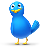 single_bird